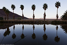 Palms at Lake Tuendae