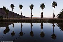 Palms at Lake Tuendae