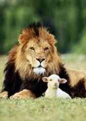 the_lion_and_the_lamb